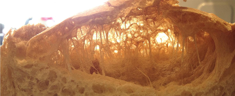 30 October 2017  Six hours rising - Sunlight through a sourdough landscape