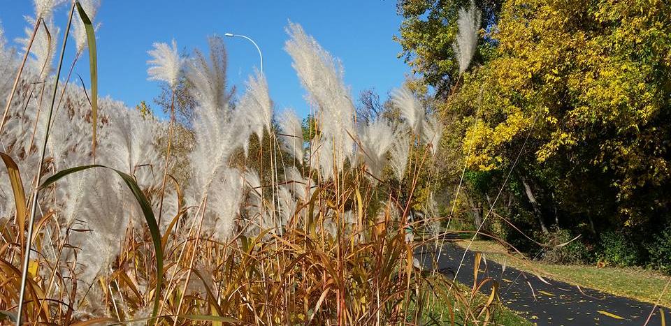 Cedar Lake Trail, Fall 2015, P.E.
