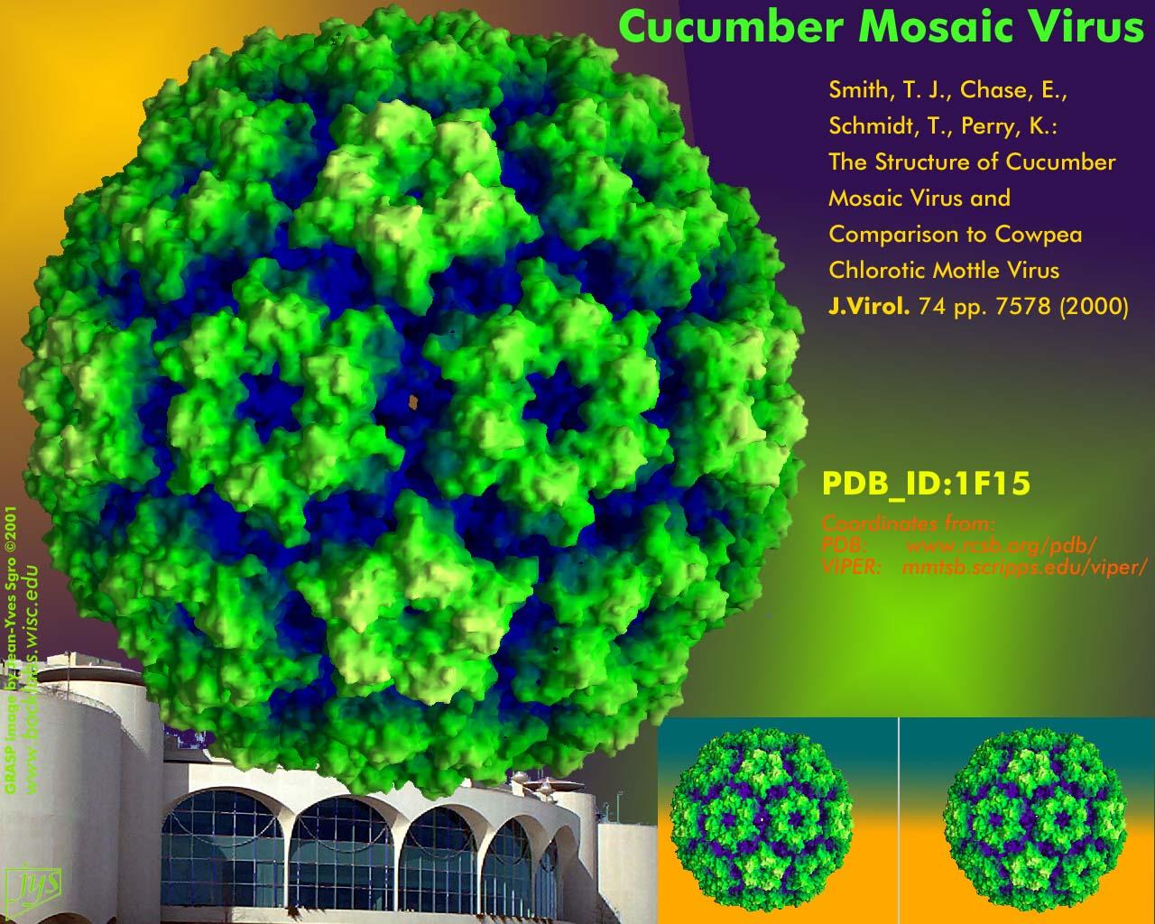 cucumber_mosaic_asv2001.jpg