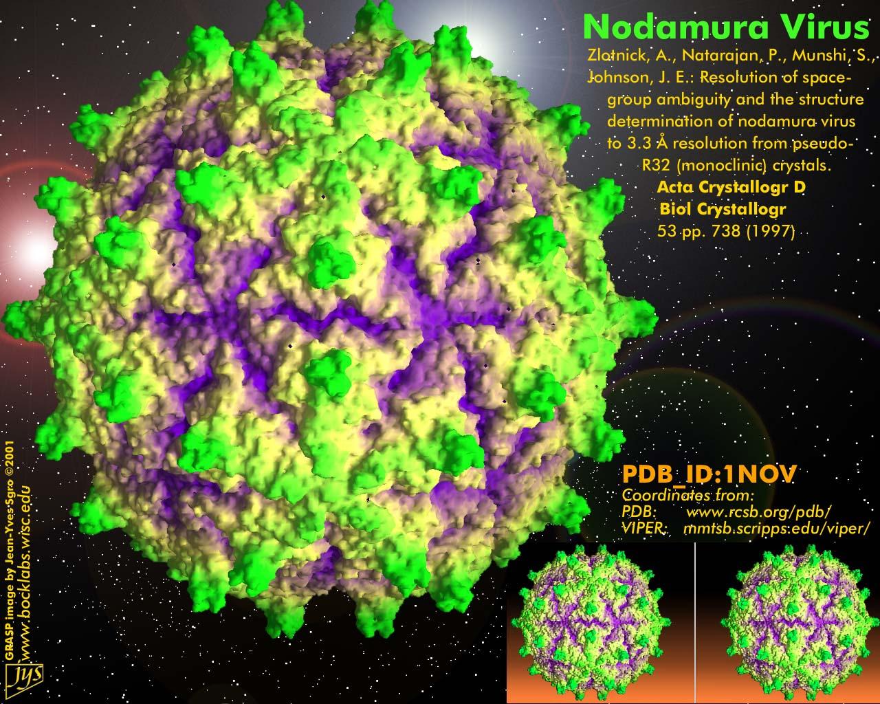 nodamura_asv2001.jpg