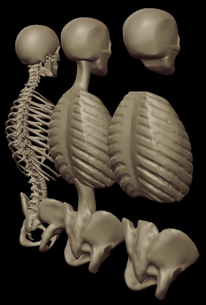 torso masses 2.png