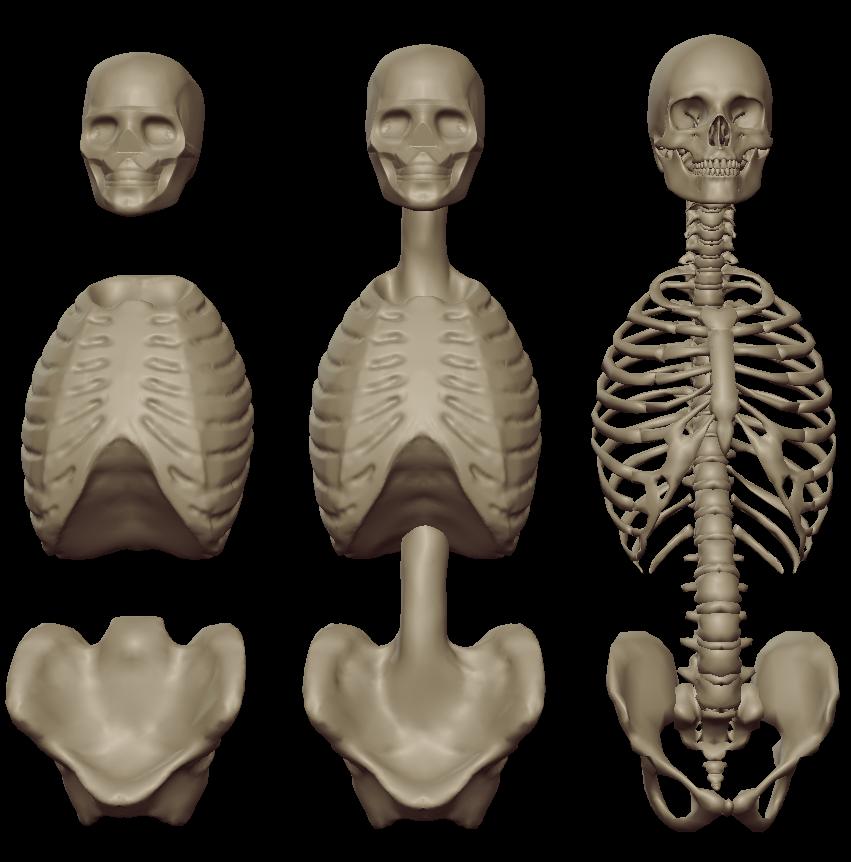 torso masses 3.png