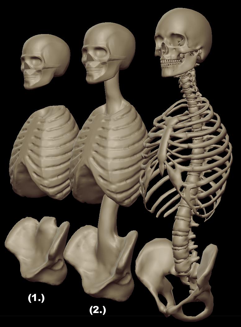 torso masses 1.png