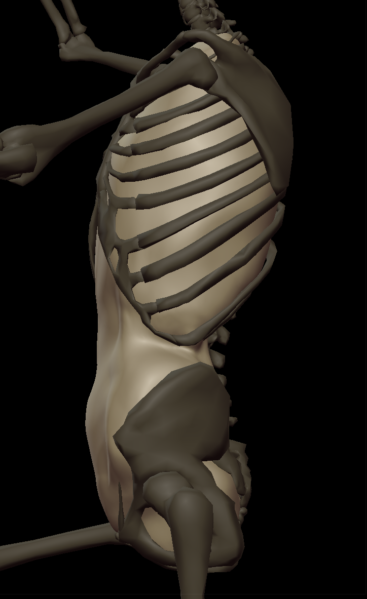 2Abdominal cavity 2.png