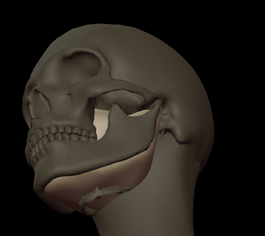 5 Mandible to hyoid 1.png