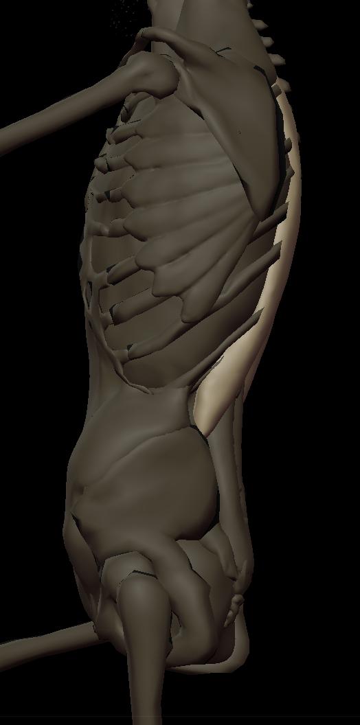 9 erector spinae 2.png