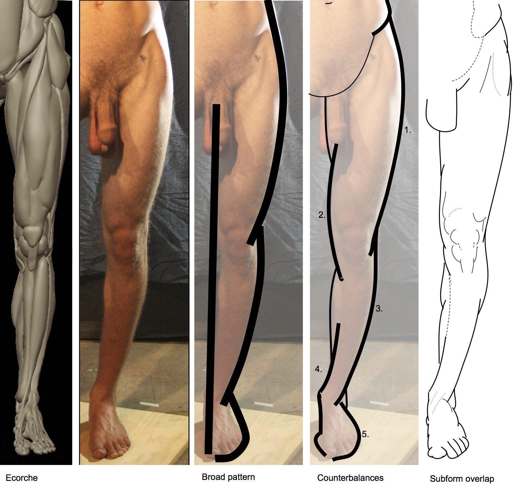 Front leg (5).jpeg