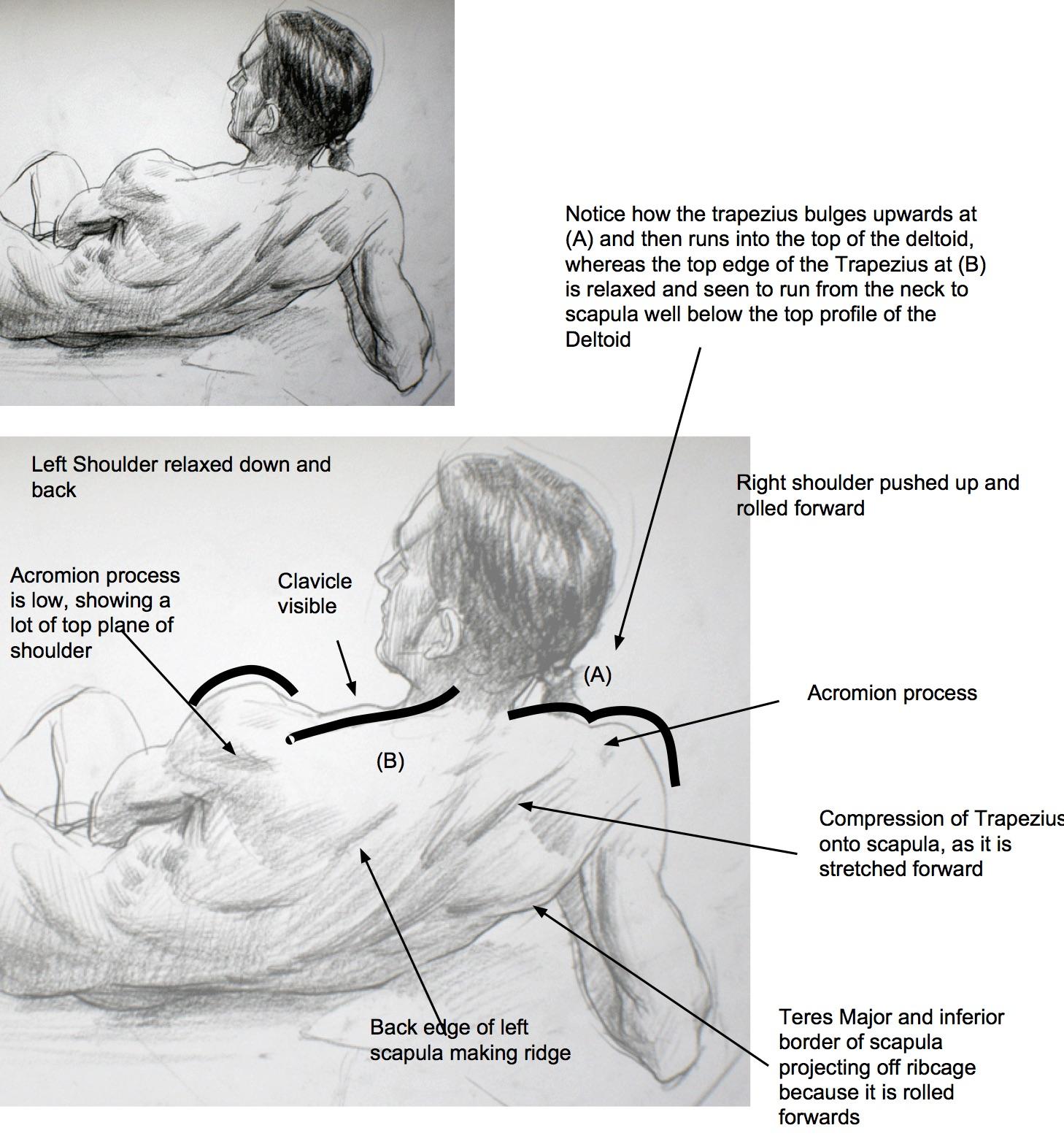 Anatomical landmarks gesture3.jpeg