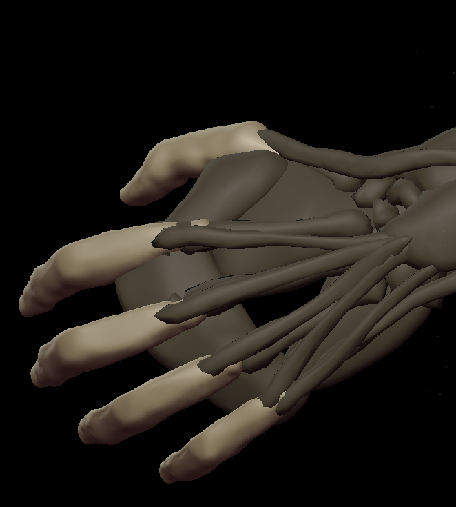 H fingers 4.png