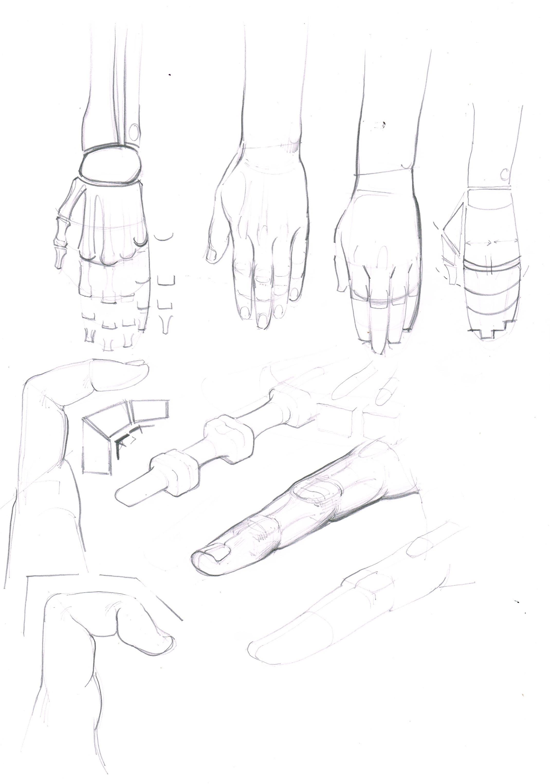 hand structure.jpeg