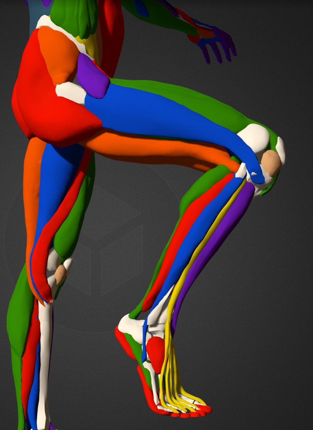 right leg colour.jpg