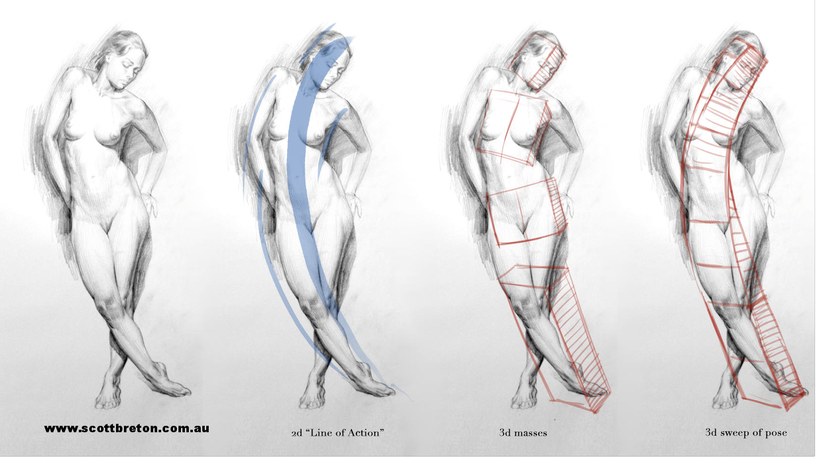 Diagram from the life drawing section of the Form, Gesture Anatomy Course