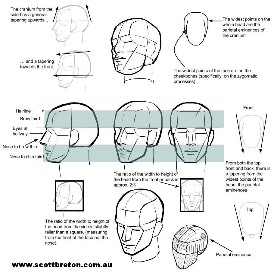 head+structure+(1).jpg
