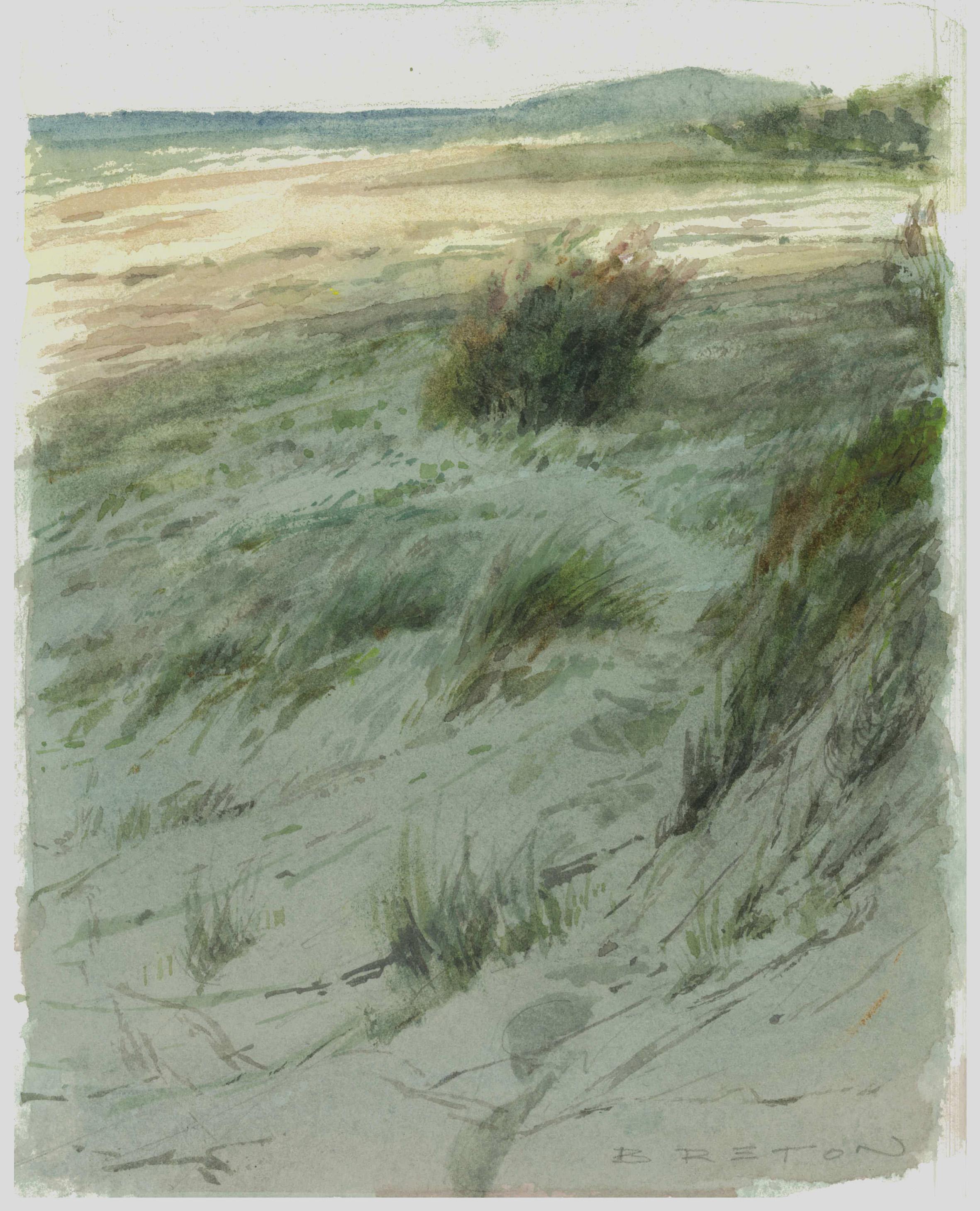Casuarina (Dune Paths Study)