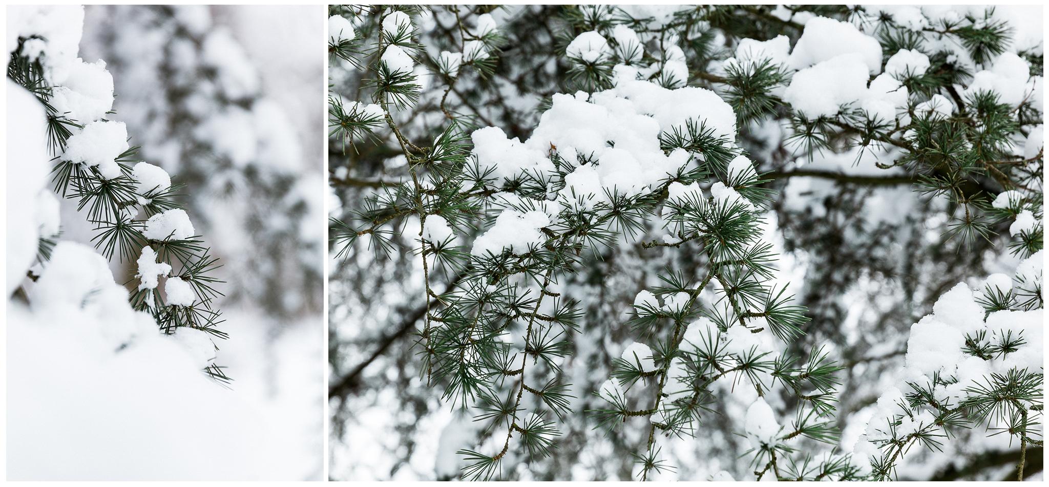 Körmend,Várkert,tél,2018,Fülöp Péter, fylepphoto, Vasmegye, Dunántúl_002.jpg