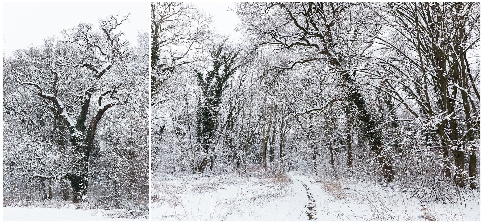 Körmend,Várkert,tél,2018,Fülöp Péter, fylepphoto, Vasmegye, Dunántúl_008.jpg