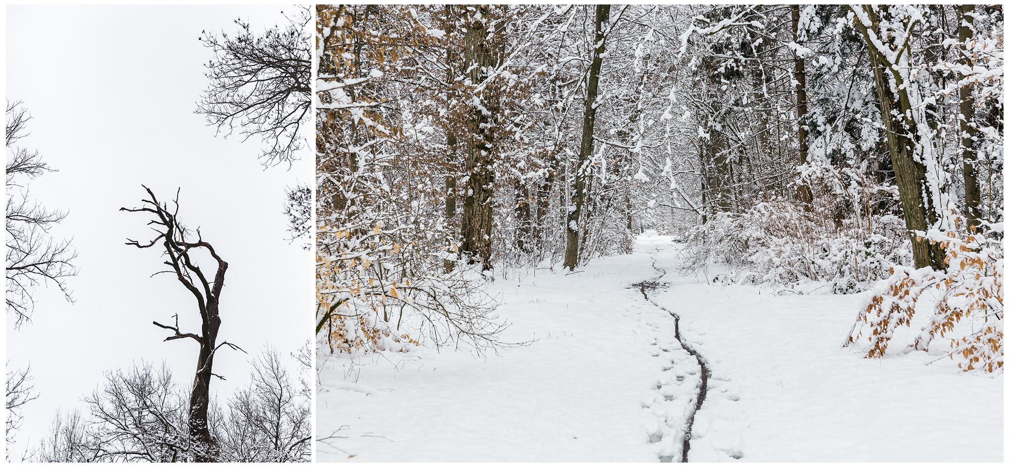 Körmend,Várkert,tél,2018,Fülöp Péter, fylepphoto, Vasmegye, Dunántúl_010.jpg