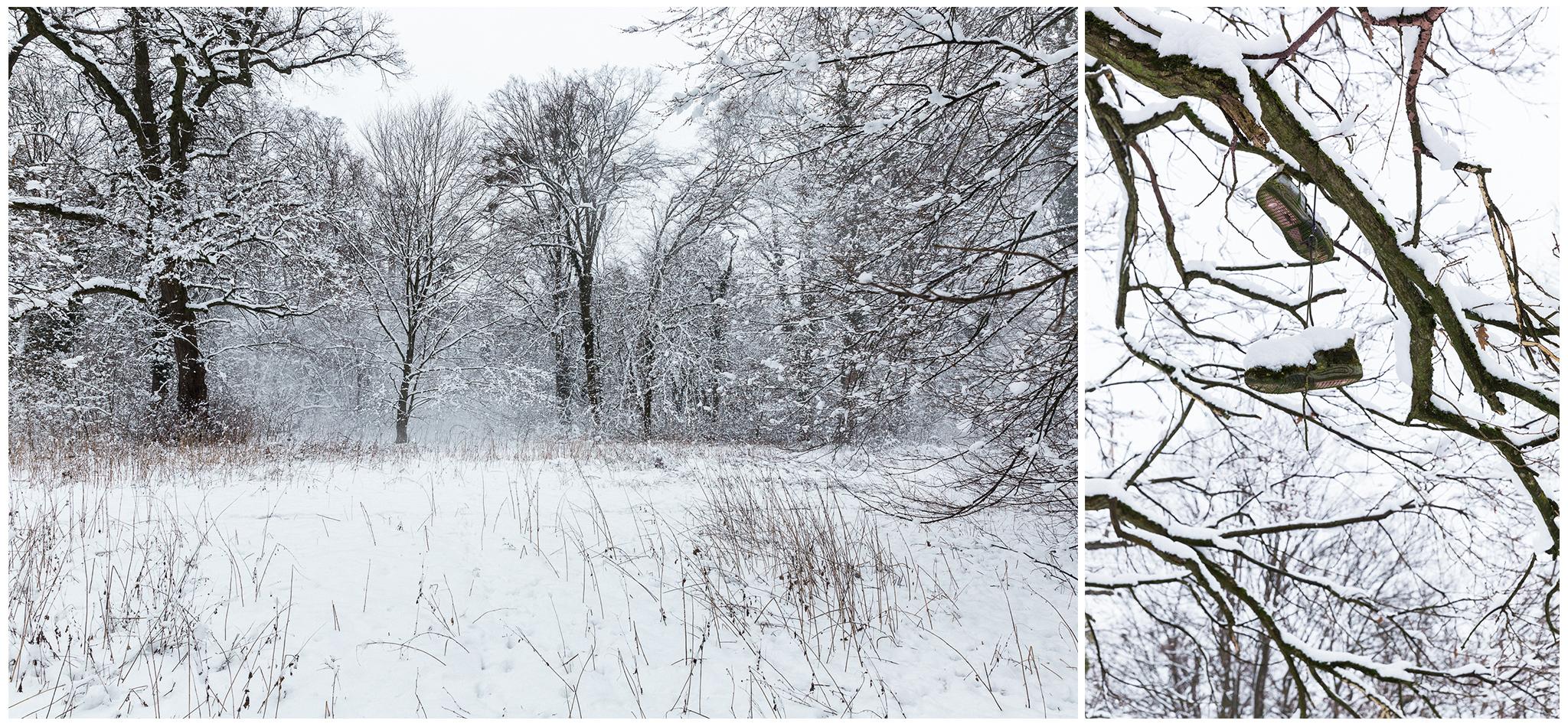 Körmend,Várkert,tél,2018,Fülöp Péter, fylepphoto, Vasmegye, Dunántúl_009.jpg