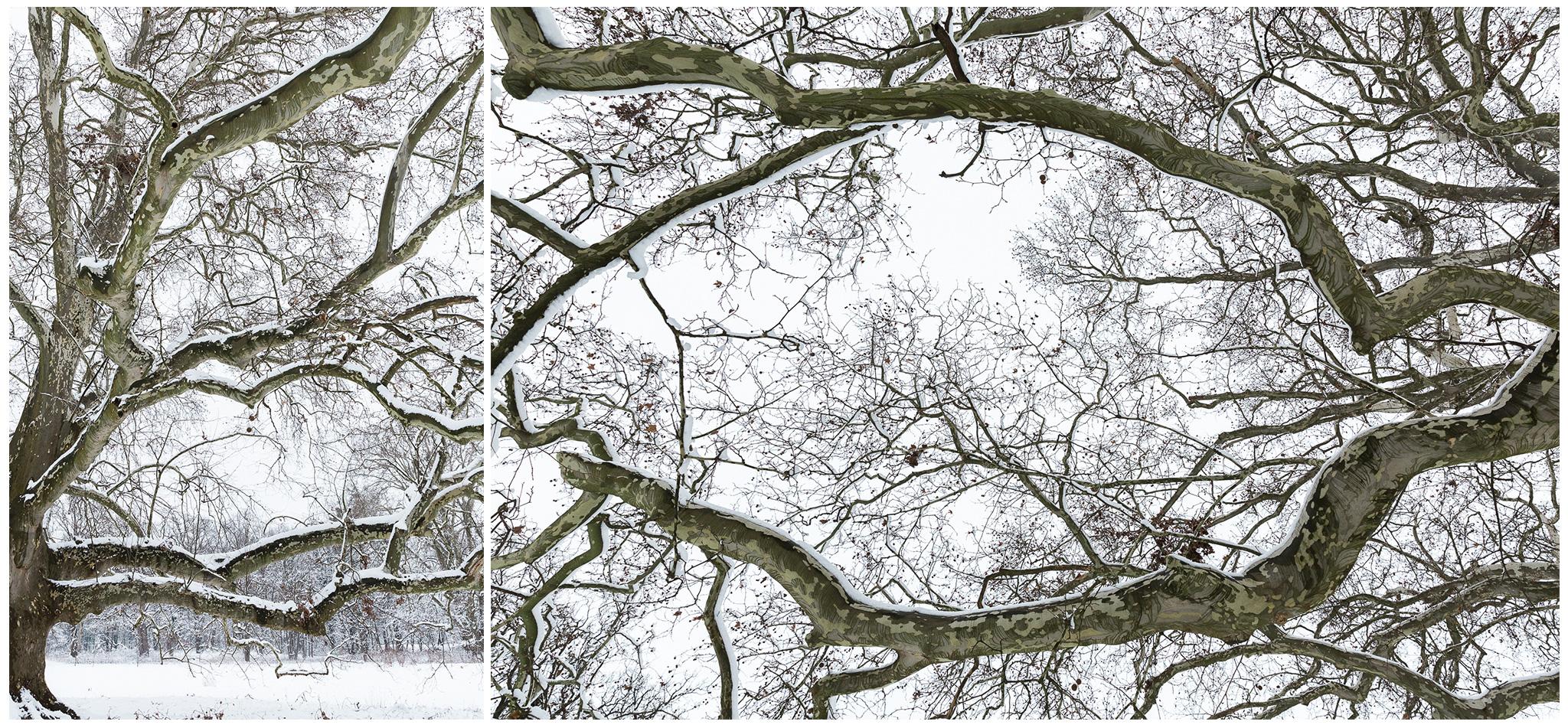 Körmend,Várkert,tél,2018,Fülöp Péter, fylepphoto, Vasmegye, Dunántúl_012.jpg