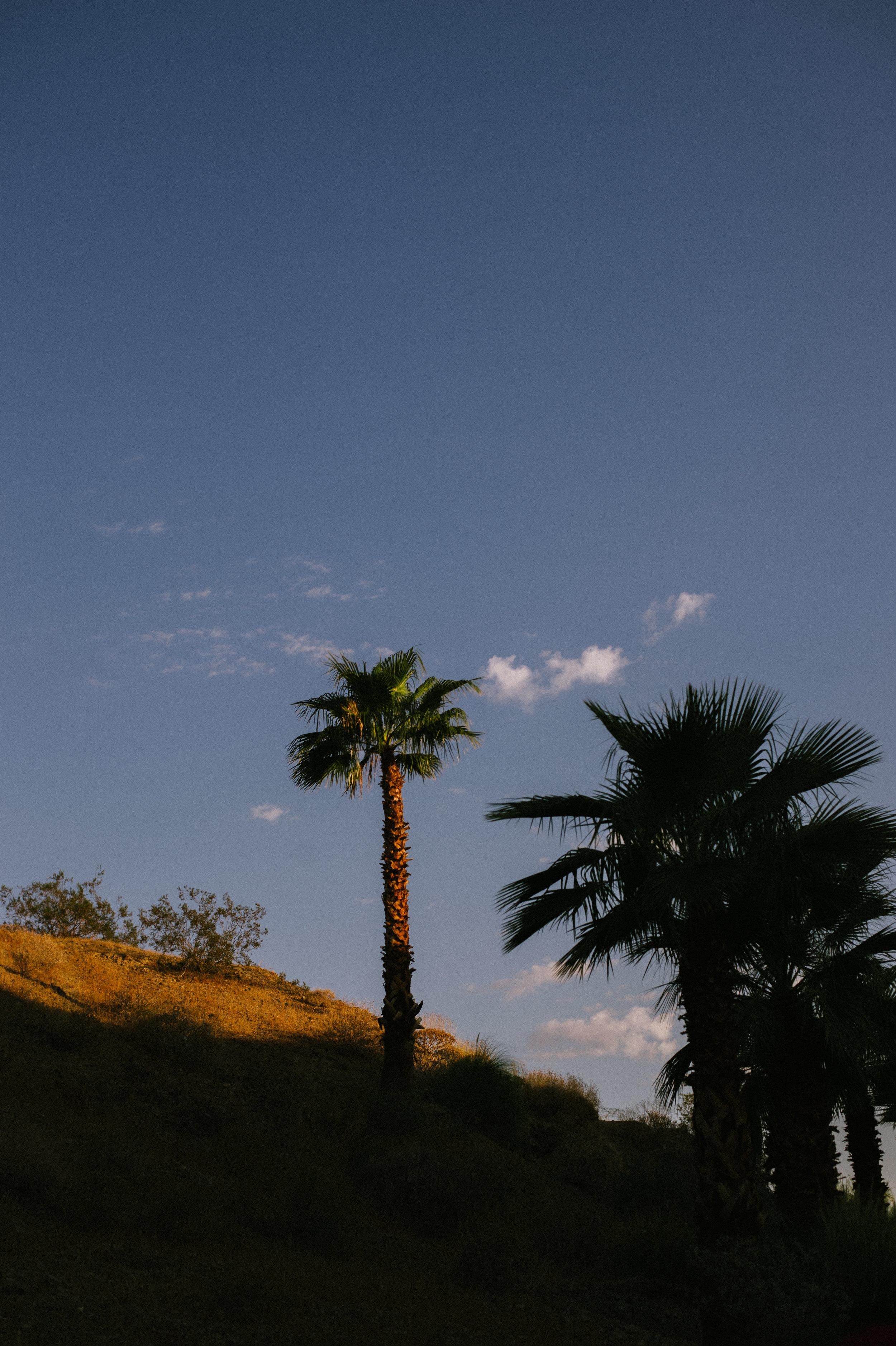 The-Glossier-Palm-Springs-CA-10.jpg