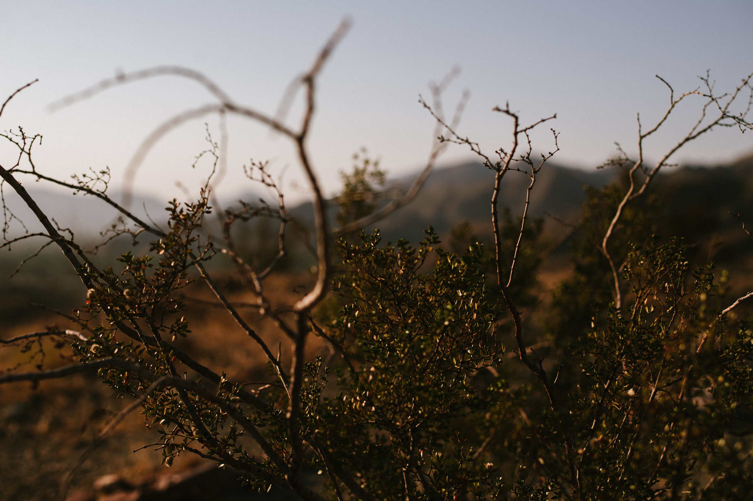 The-Glossier-Palm-Springs-CA-16.jpg