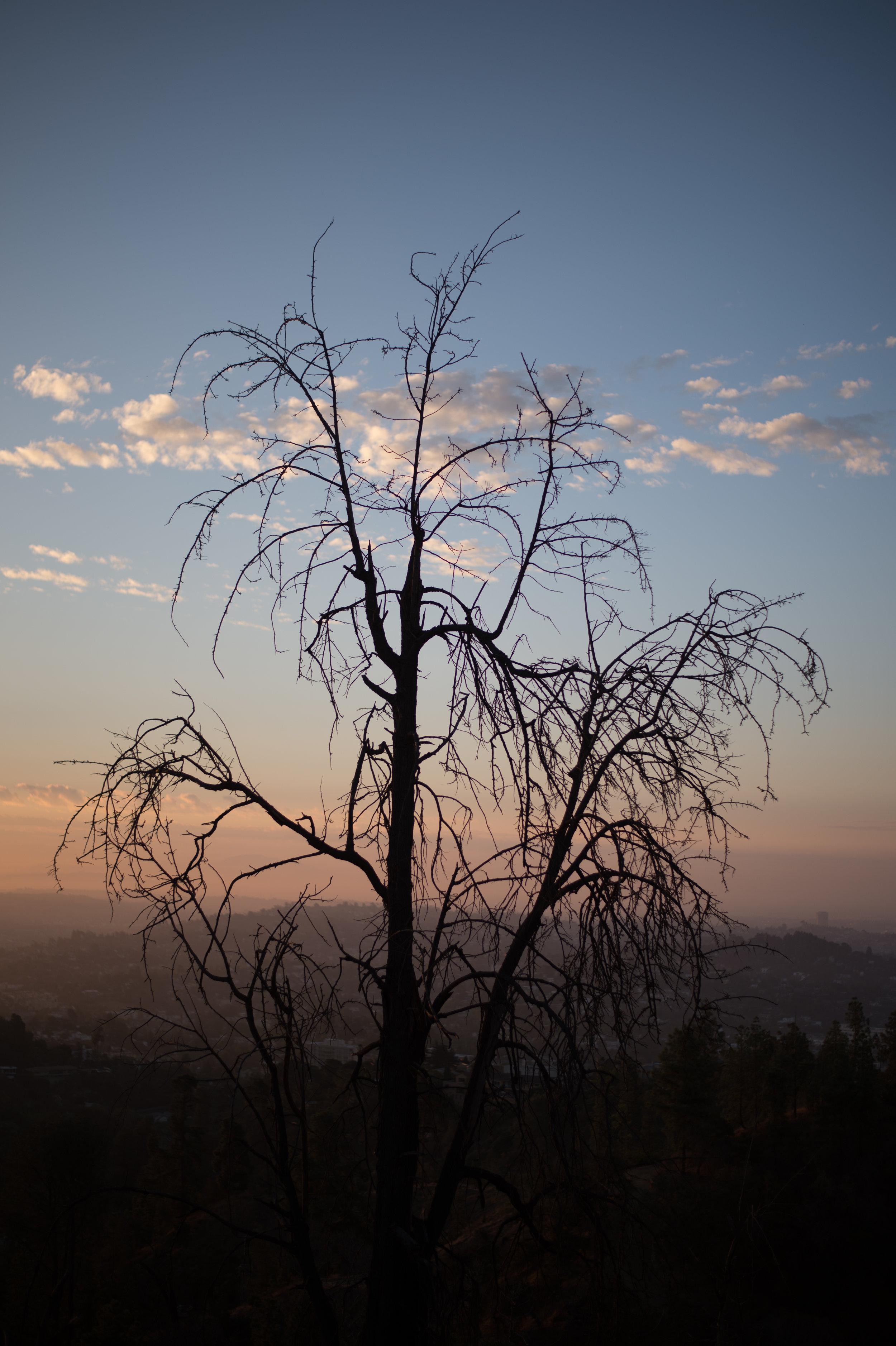LA-Los-Angeles-Photo-Diary-The-Glossier-46.jpg
