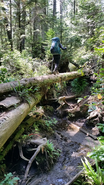 Log bridges for the win