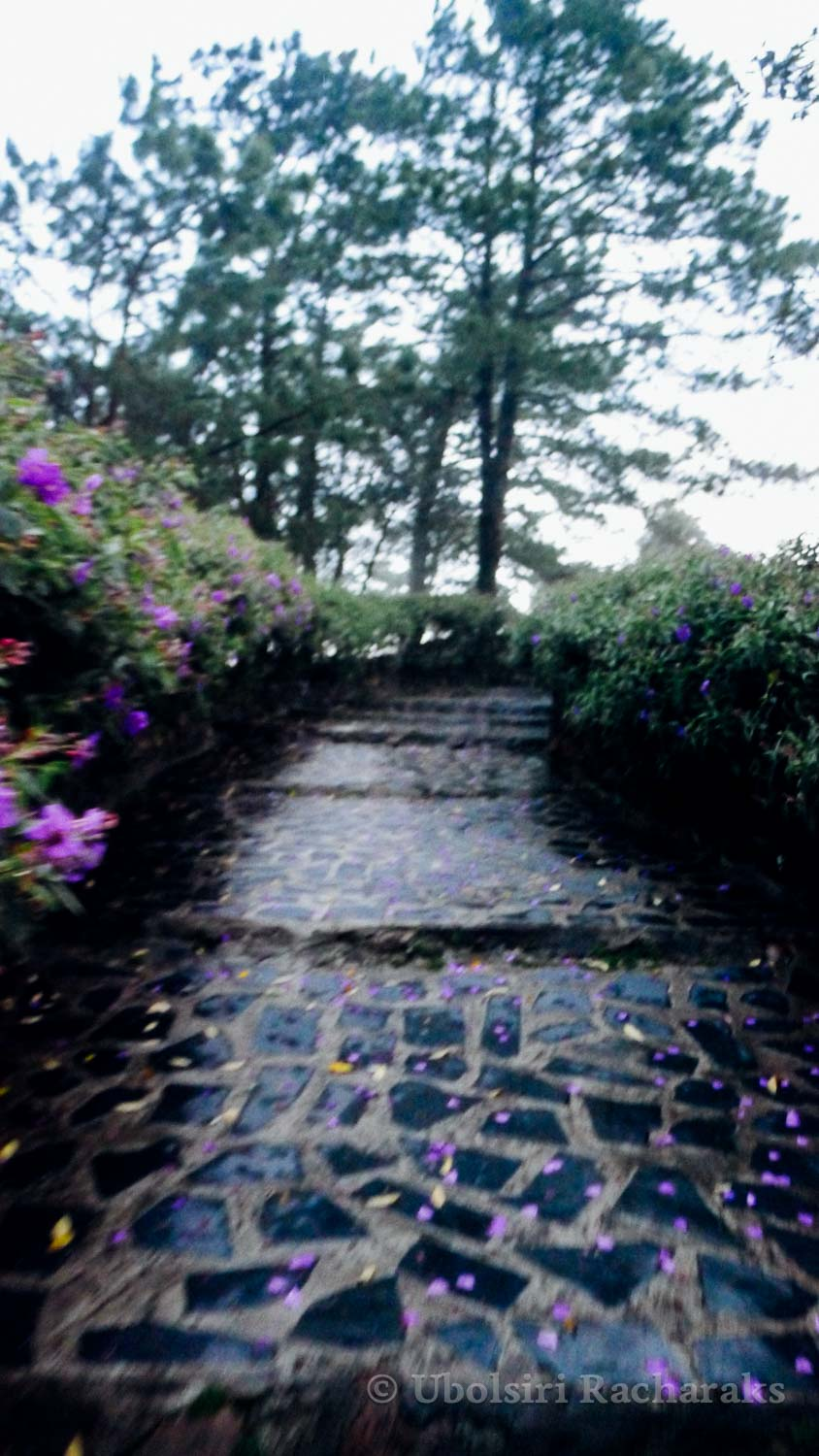 Blurry Wet Stone Pathway with Purple Flowers