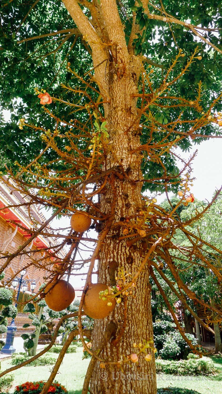 Tree at Wat Neramit Wipatsana