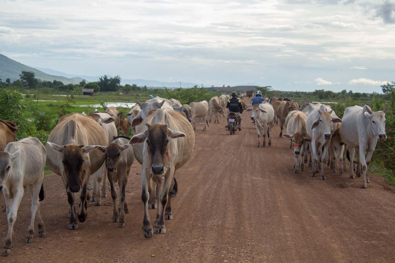 Cambodia - Kampong Chhnang--2018-11.jpg