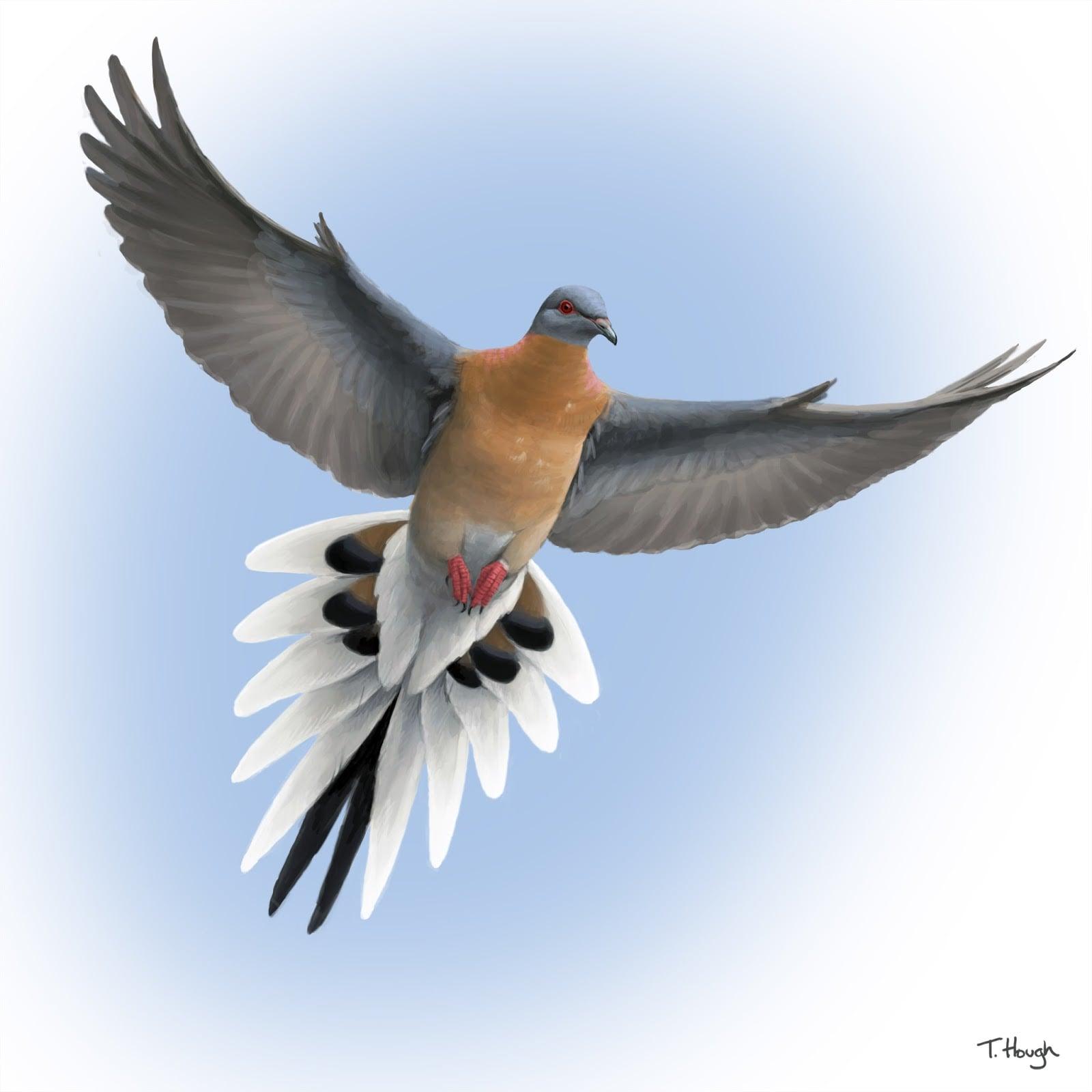 passenger_pigeon_in_flight.jpg