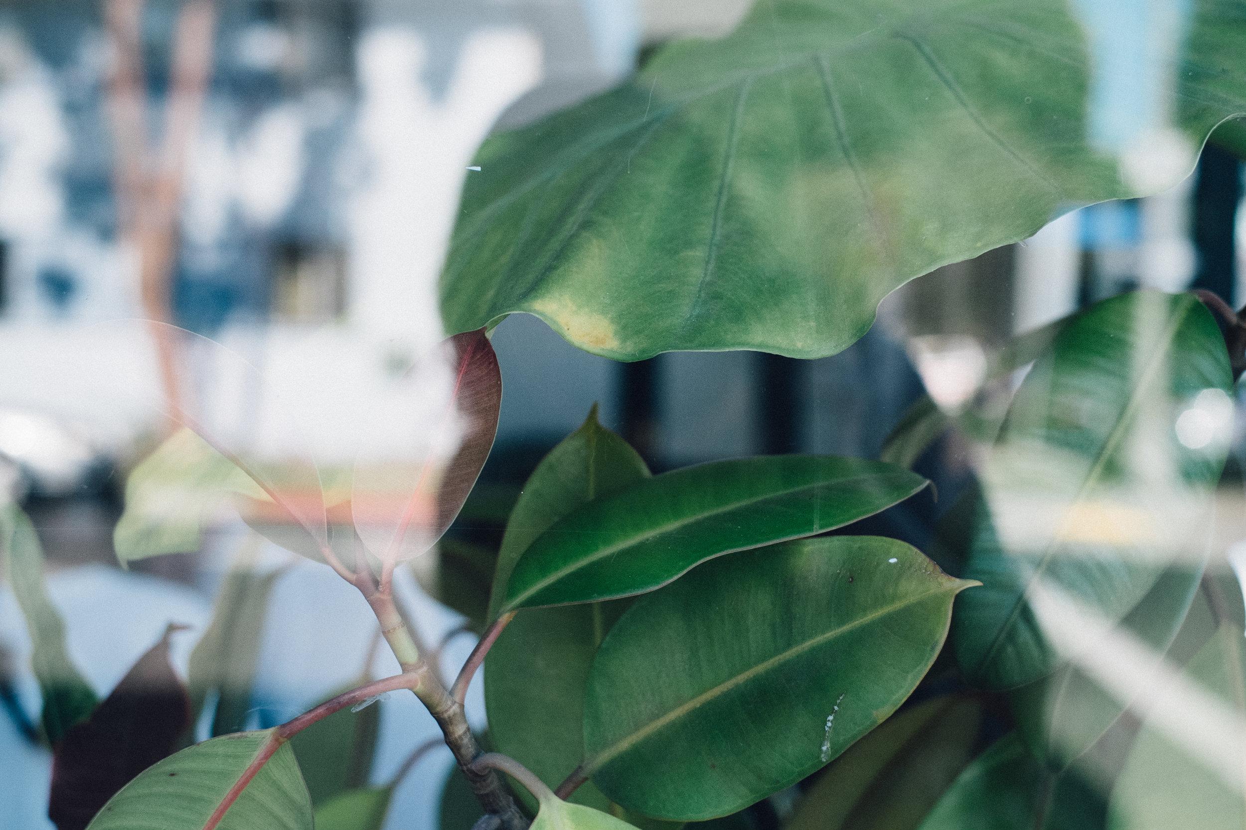 plants2-2.jpg
