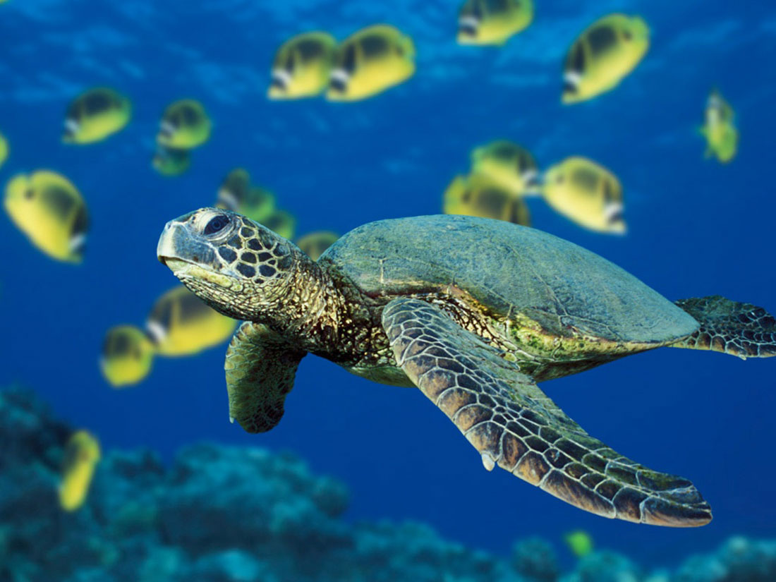 BELIZE - EXPAND NETWORK OF NO-TAKE AREAS -
