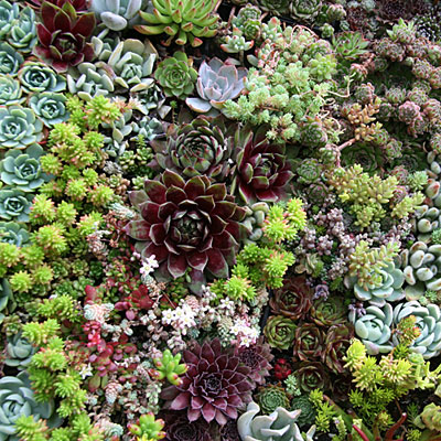 A succulent garden - colors, textures, and a temptation to touch.