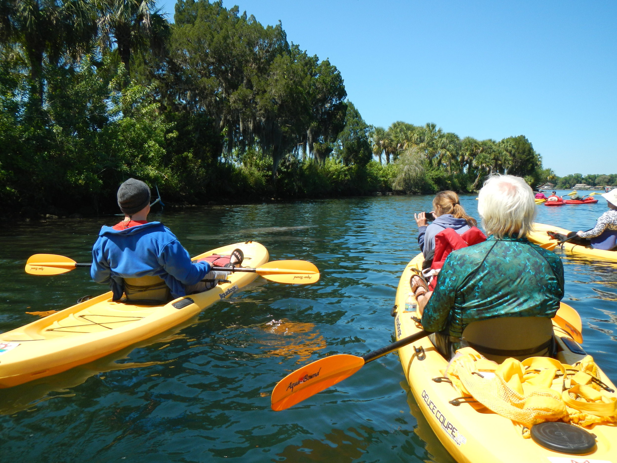 This tour is located about an hour north of Tampa.  We'll wind our way through the community of Crystal River and meet some underwater inhabitants.  This paddle is offered year-round but manatees are best seen in Winter months (Nov-Feb)