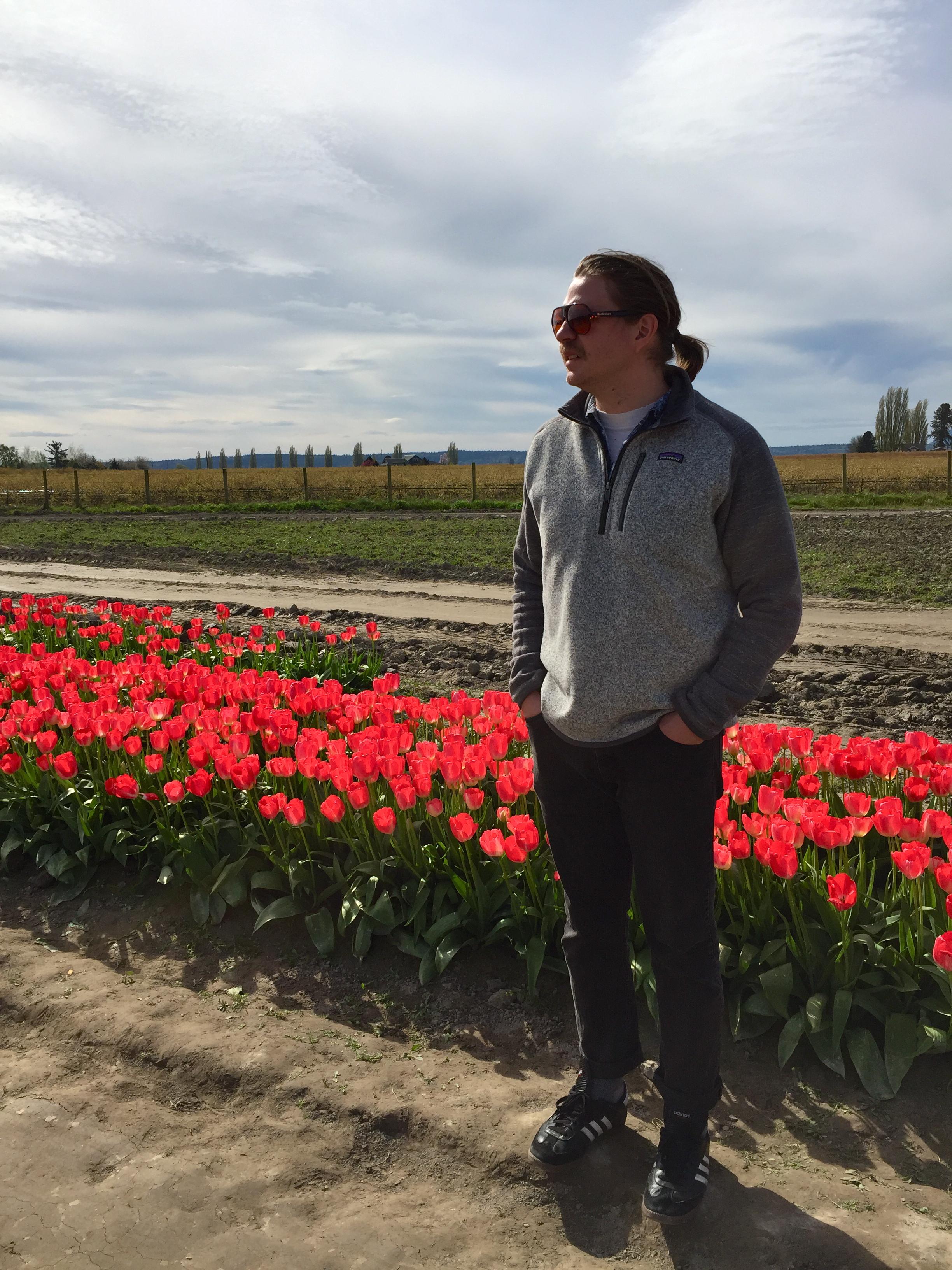 tulip_14.jpg