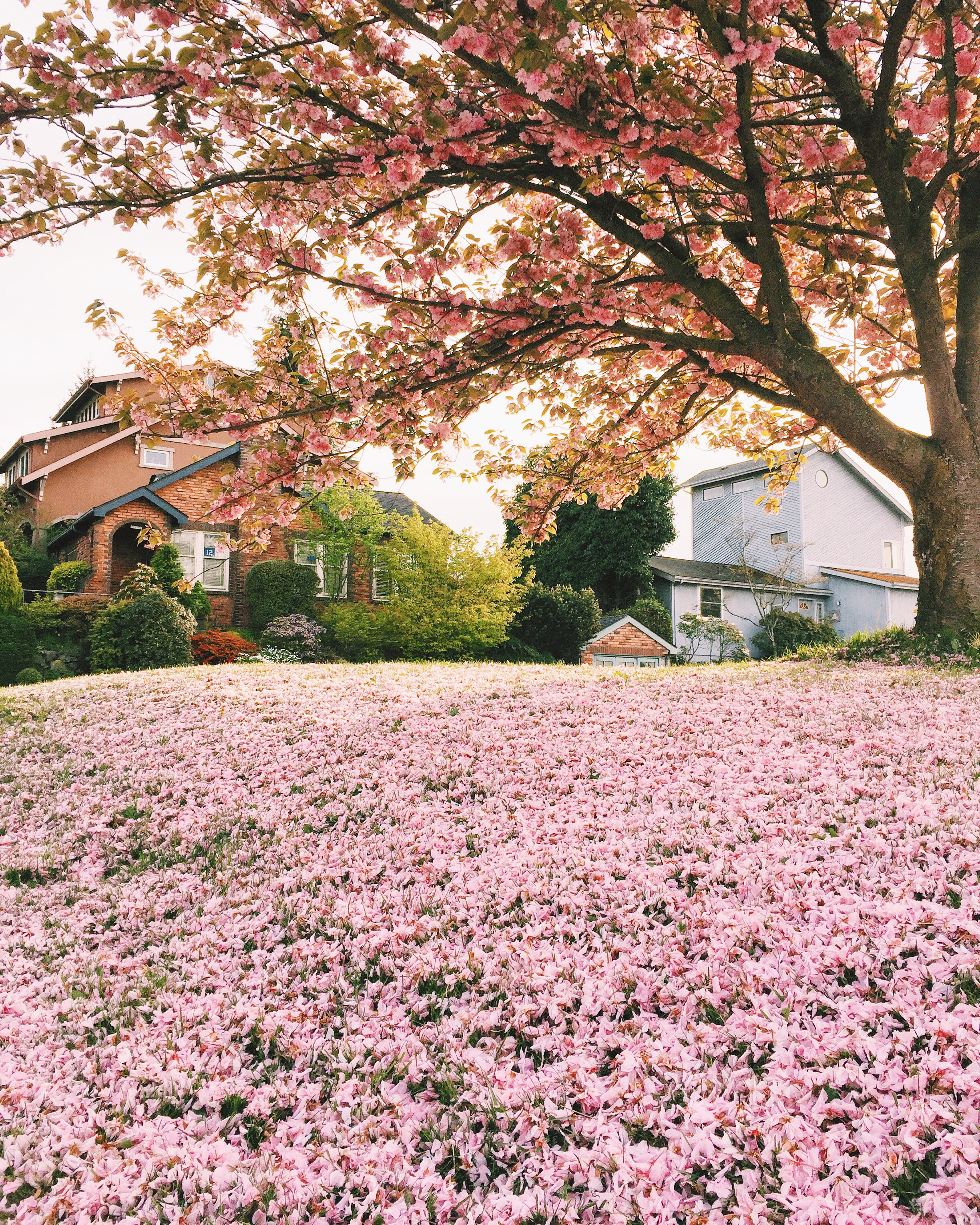 seattle spring-quinns place_8.JPG