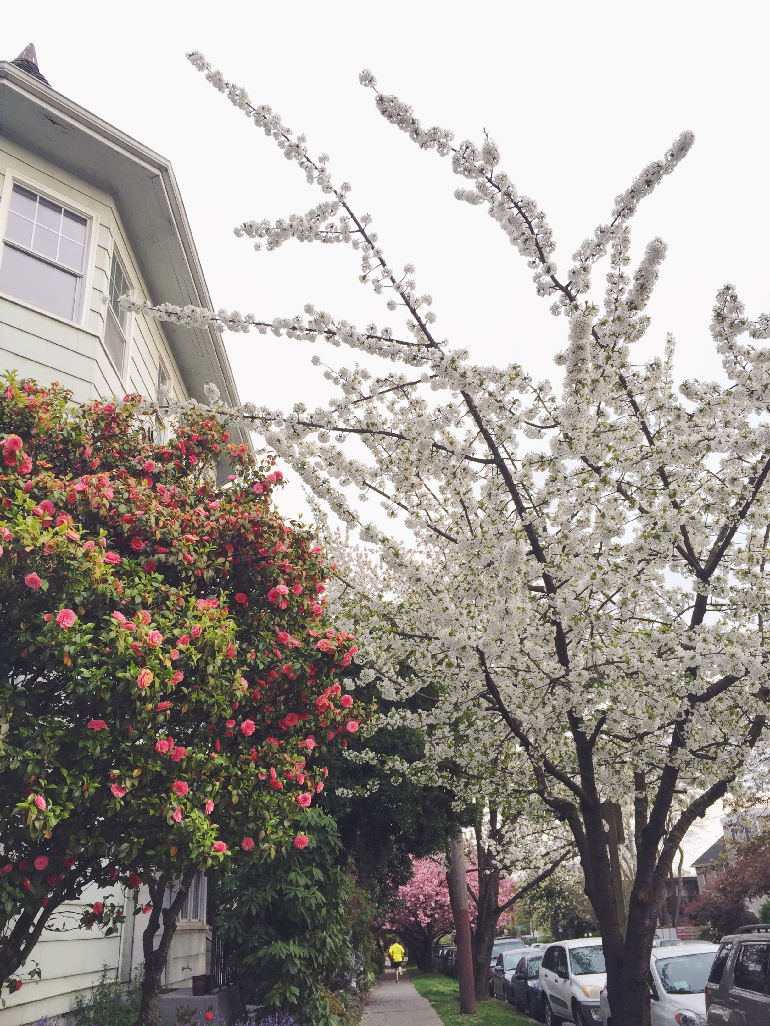 seattle spring-quinns place_27.JPG