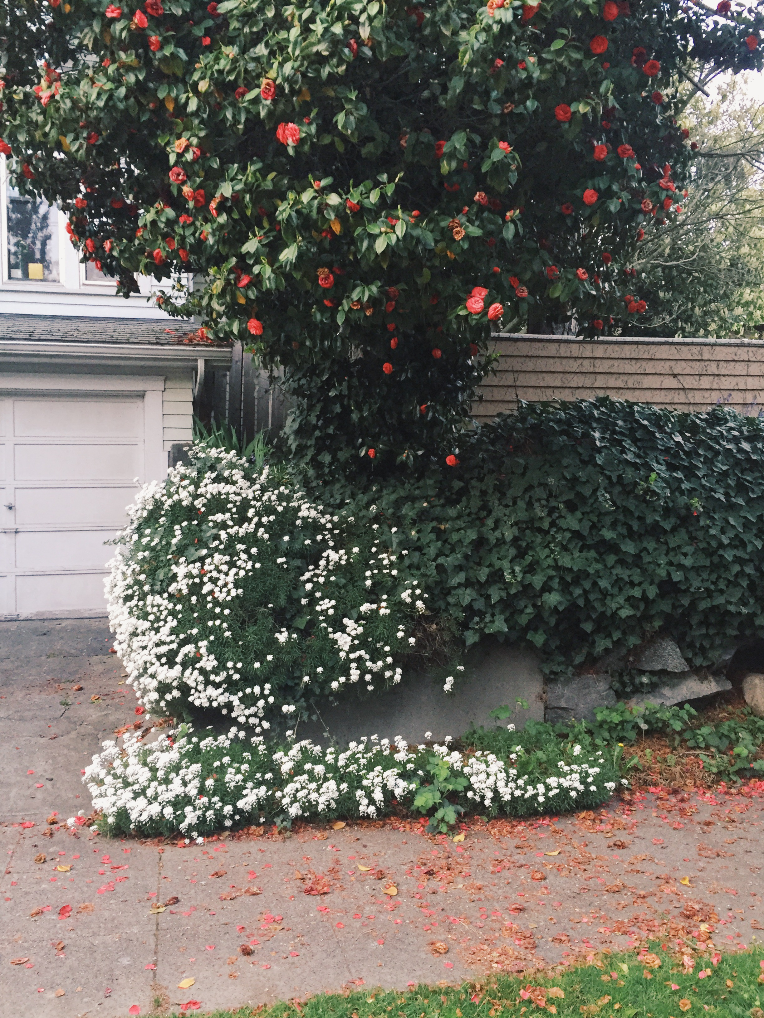 seattle spring-quinns place_28.JPG