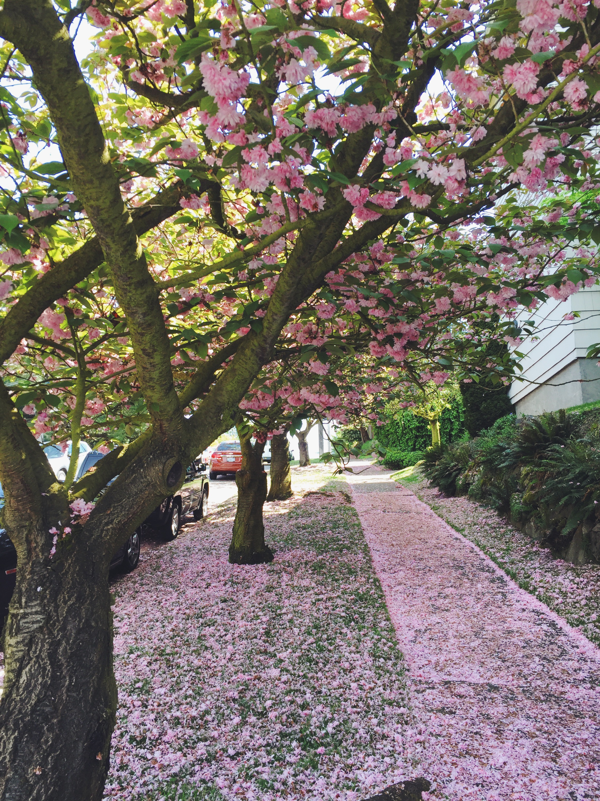 seattle spring-quinns place_36.JPG