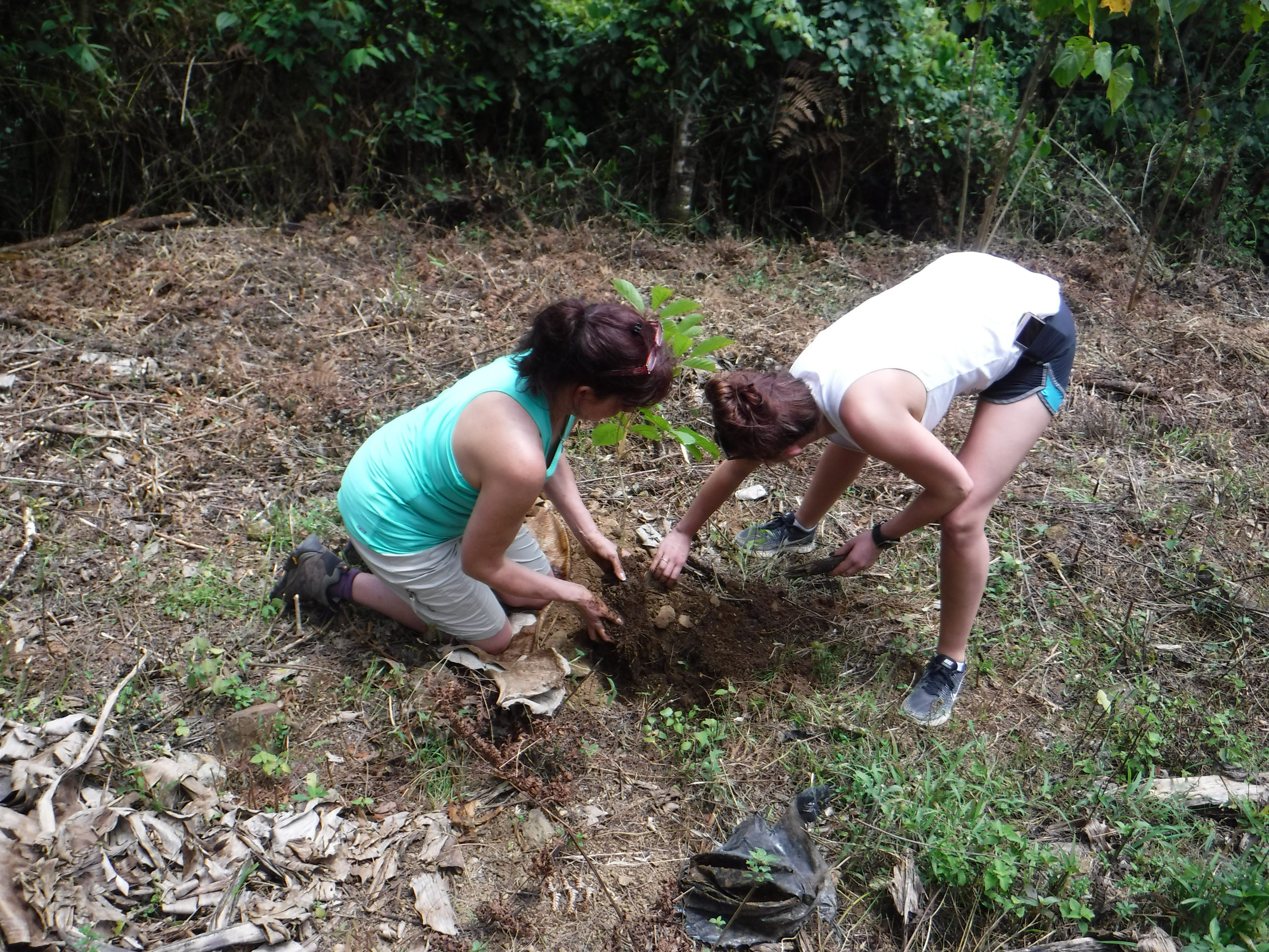 Our groups are a part of a local Reforestation & Conservation Project in Costa Rica. Eventually these trees will form a Biological Corridor and provide food, shelter and habitat to local wildlife. -