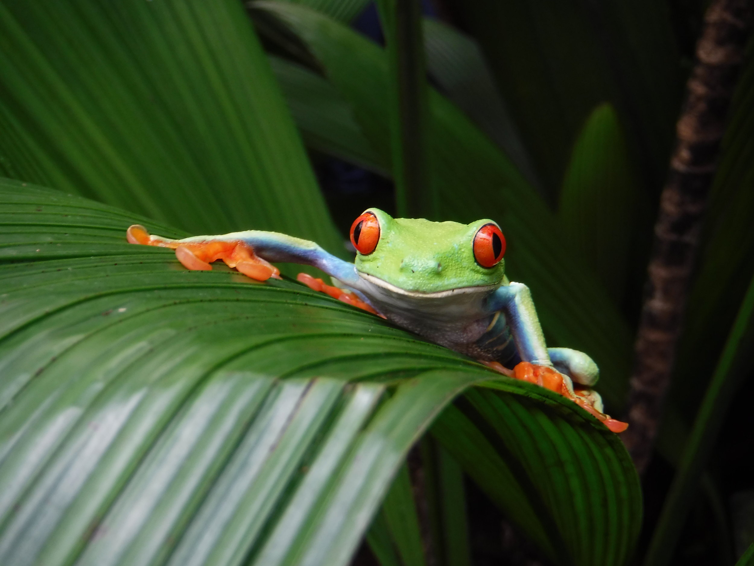 Frog Habitat Restoration Project – Go in to the field with guides and biologists to work on a habitat restoration project. -