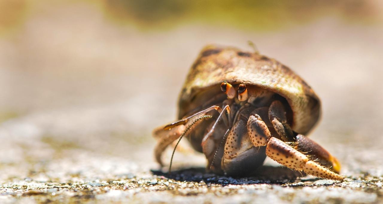 crabbyholidays