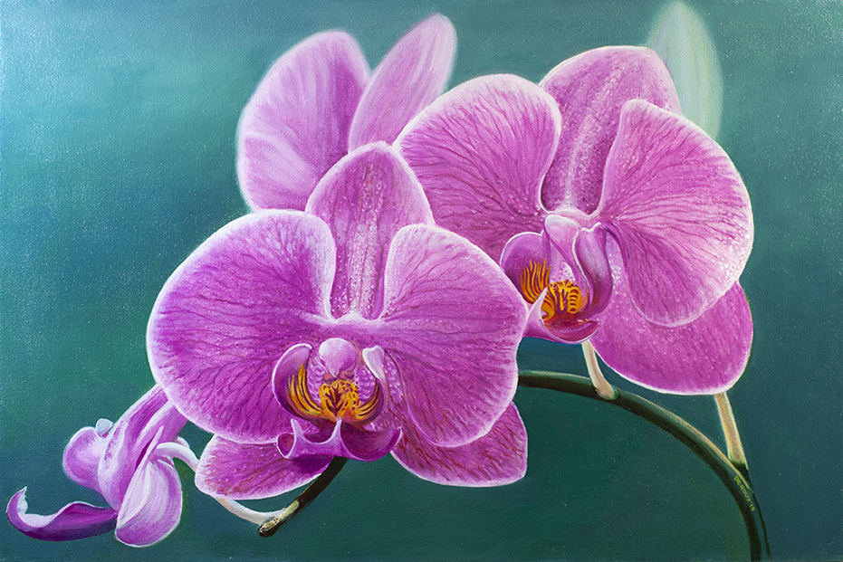 """ORCHIDS, 23""""x35"""" OIL ON CANVAS $1,500"""