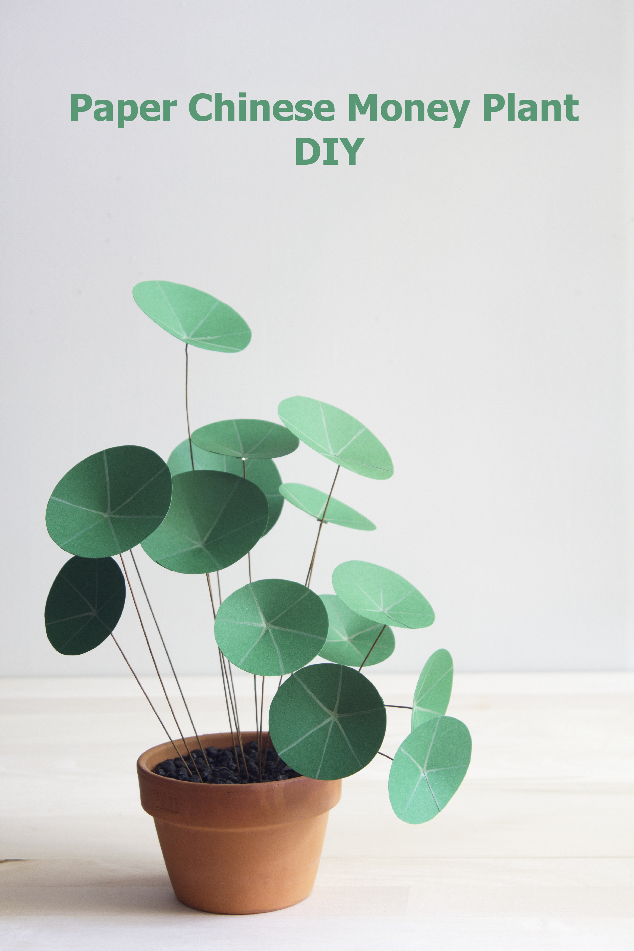 Paper Chinese Money Plant Diy The Apple Of My Diy
