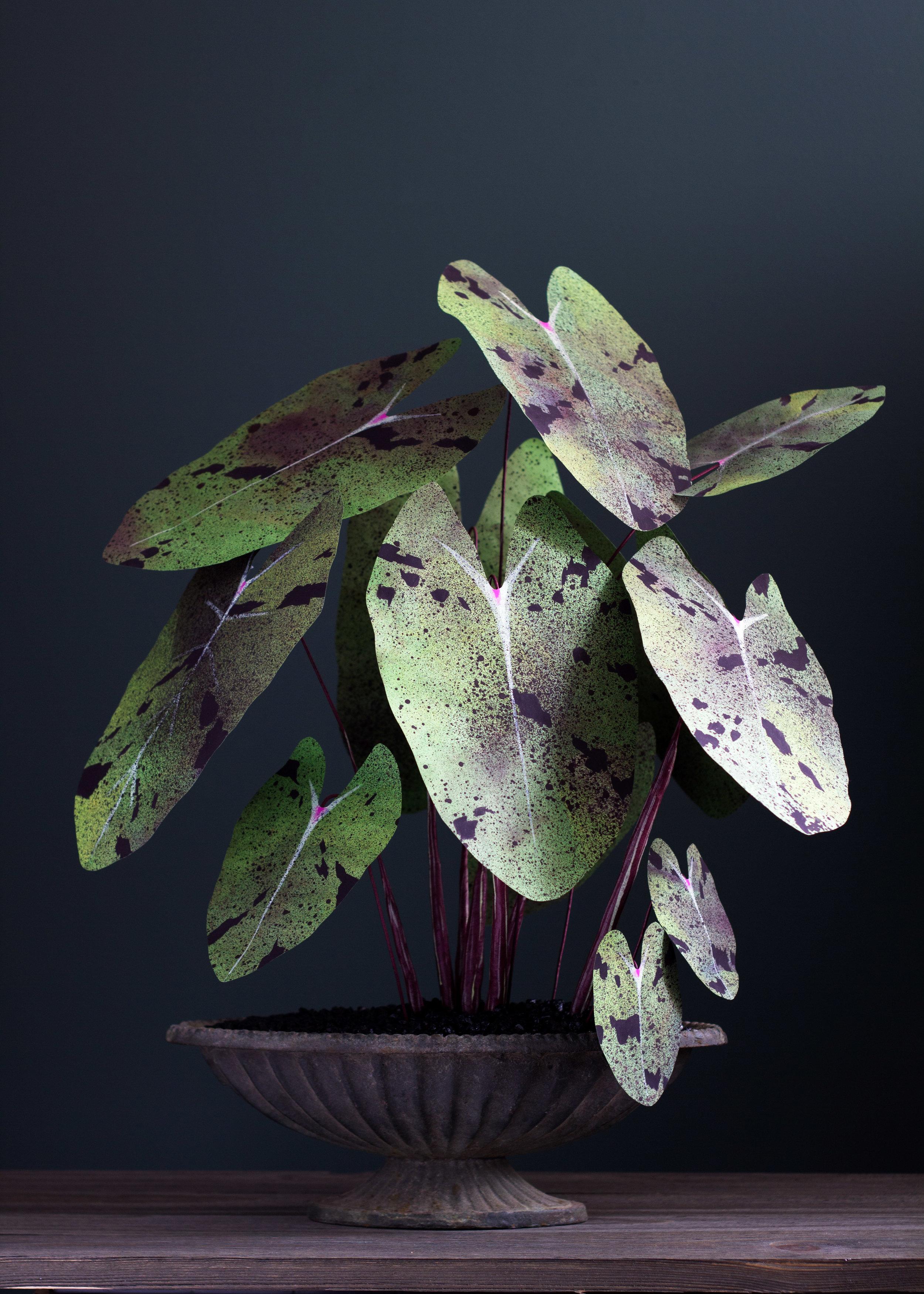 CorrieBethHogg_paperplant_mojito3.jpg