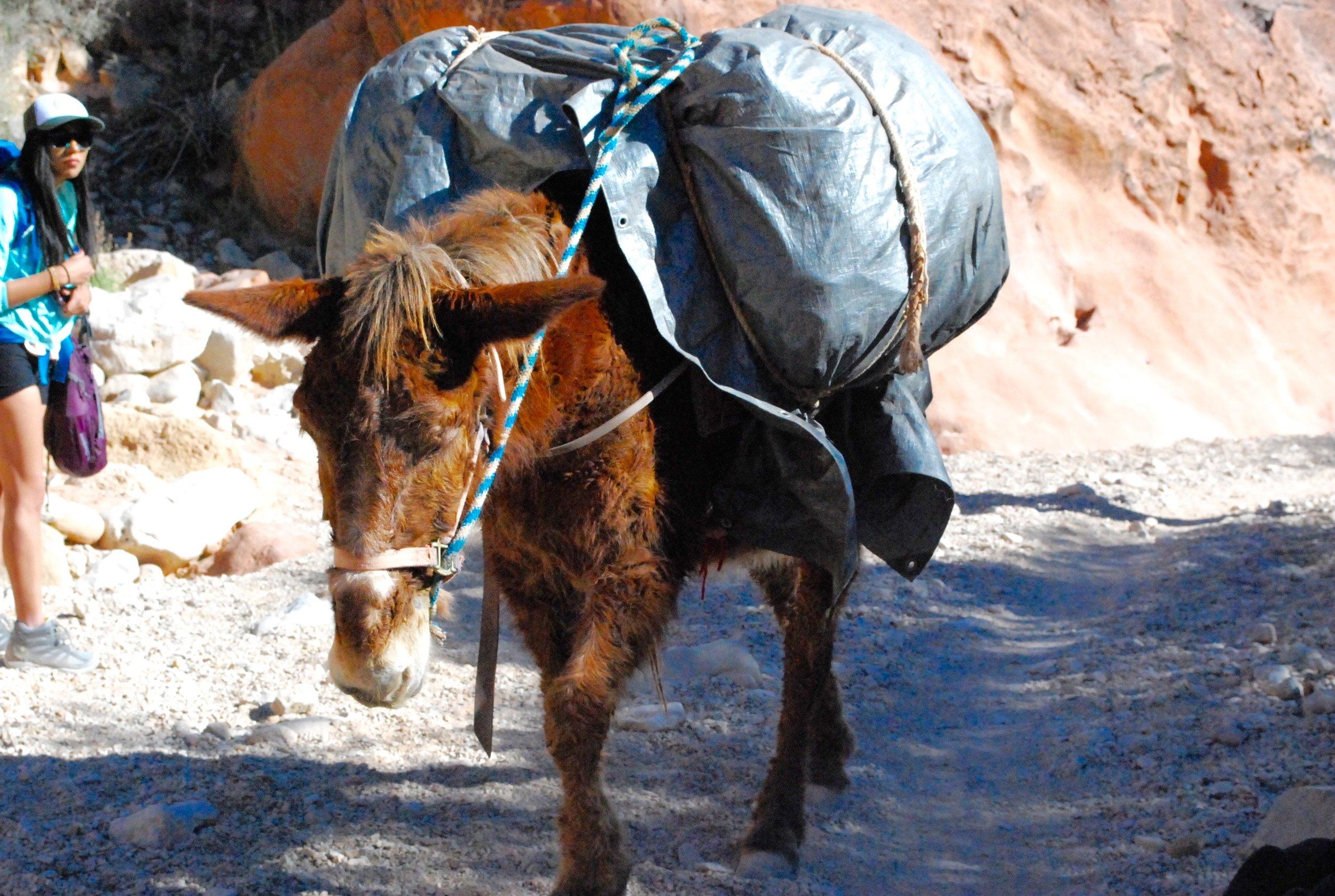 havasu falls travel tipsjpg