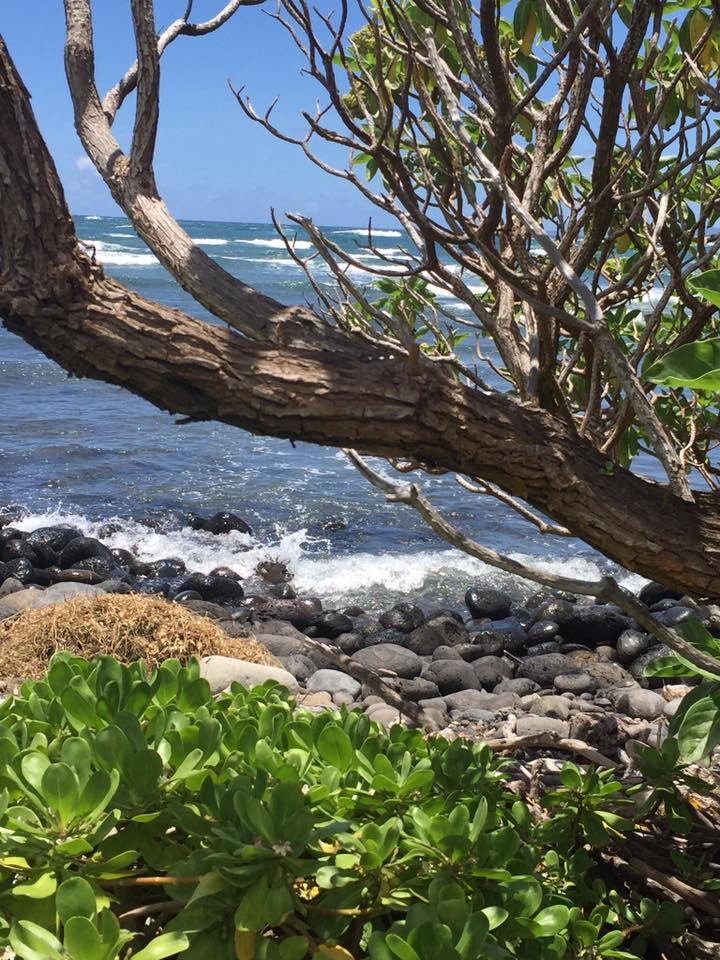 Maui Land Trust Refuge June 16, 2016