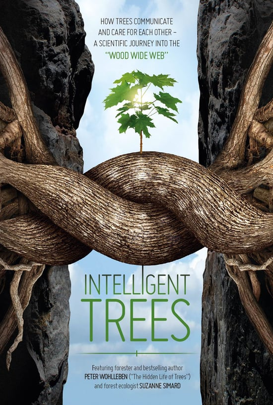 friends-of-carmel-forest-intelligent-trees.jpg