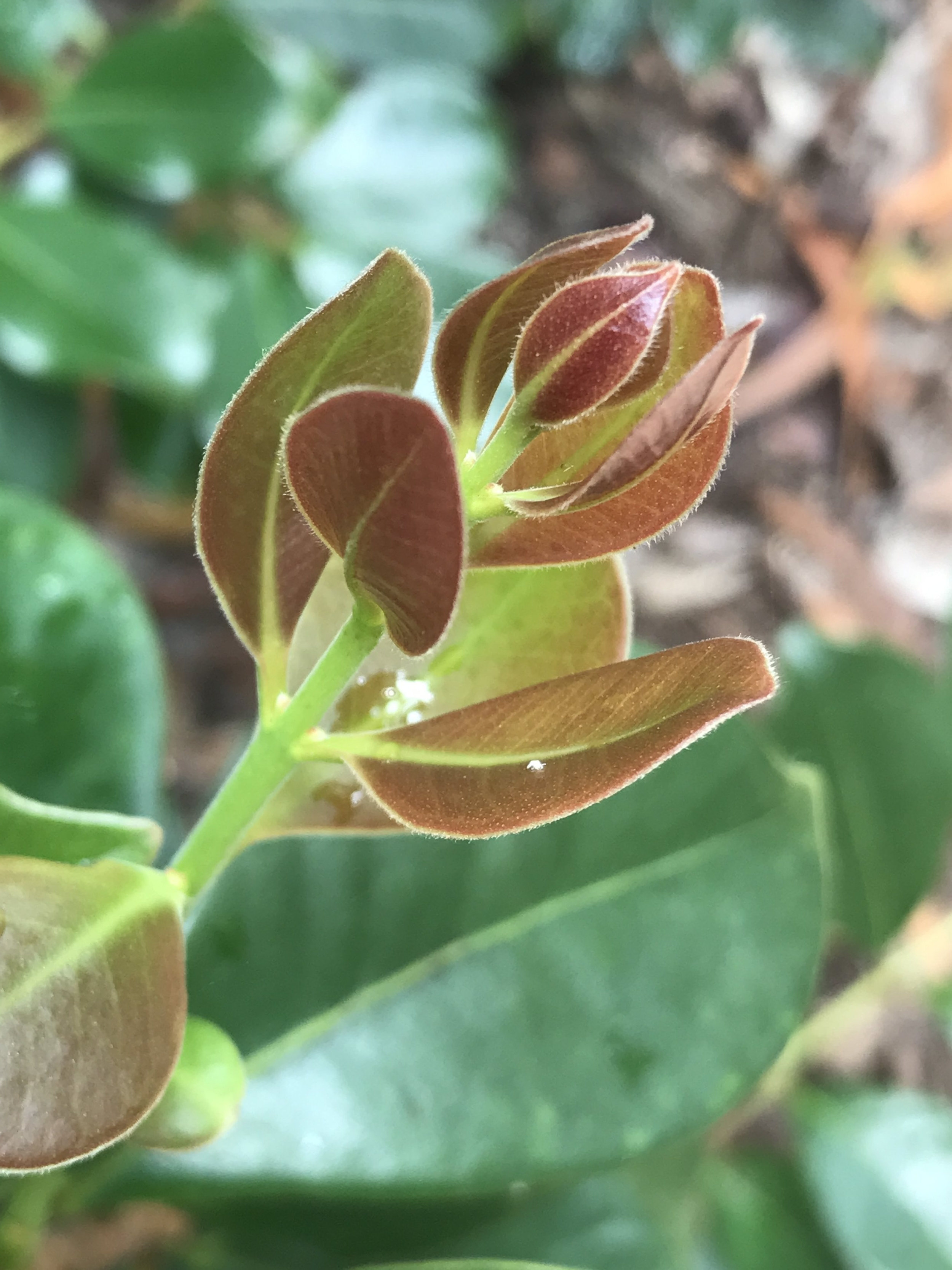 Plant Spirits Kauai Shamanism Retreat.JPG